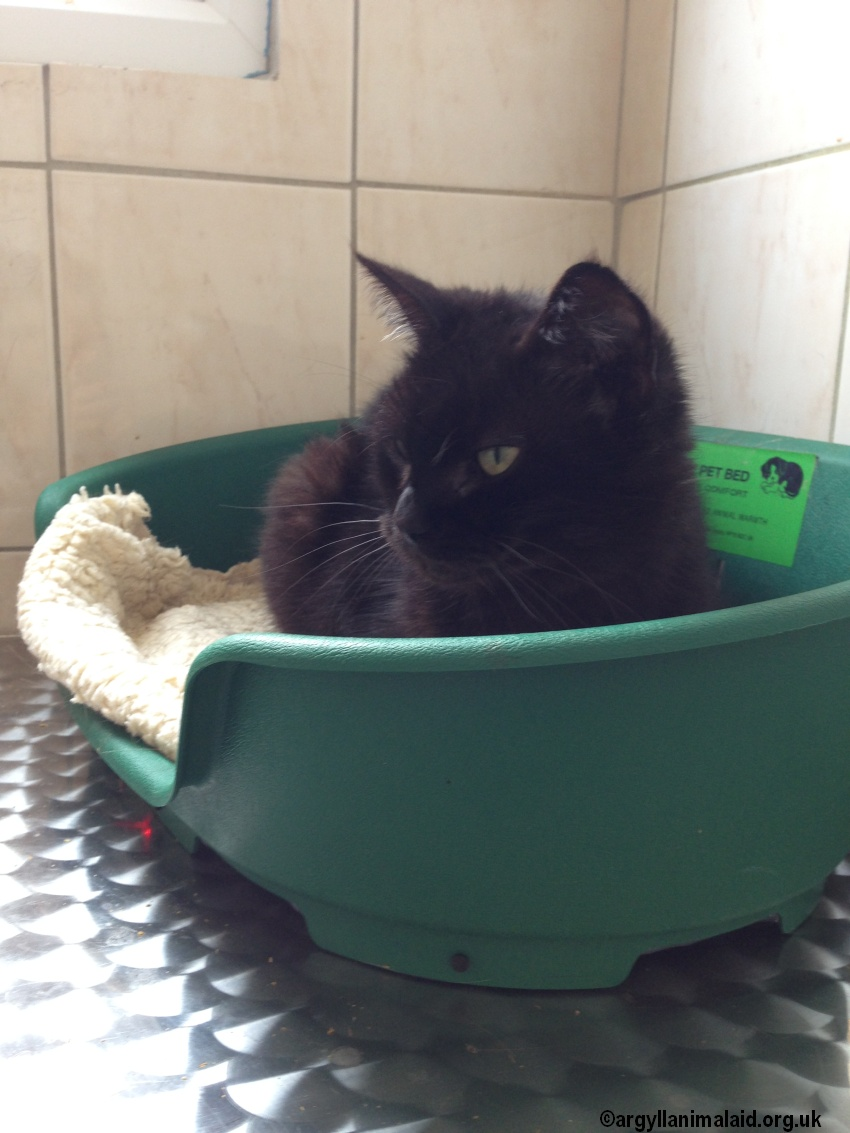 Re-homed: Suzie – black cat