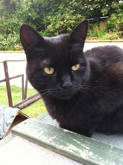 Chico is missing – black cat around Taynuilt