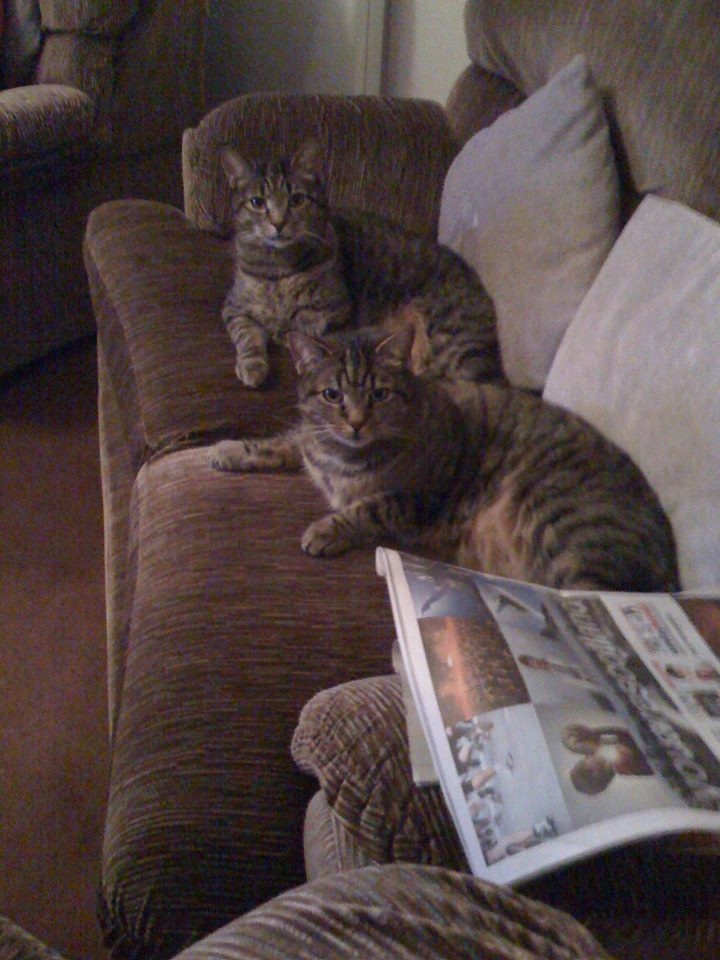 Isla and Skye – two tabby cats – Now Rehomed