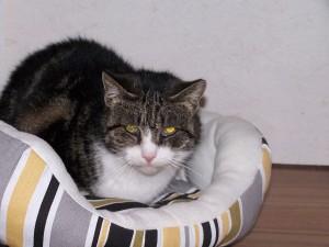 Bobby from Balvicar008