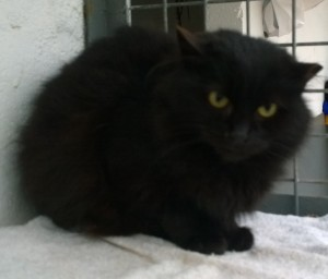 sooty - fierce black feral