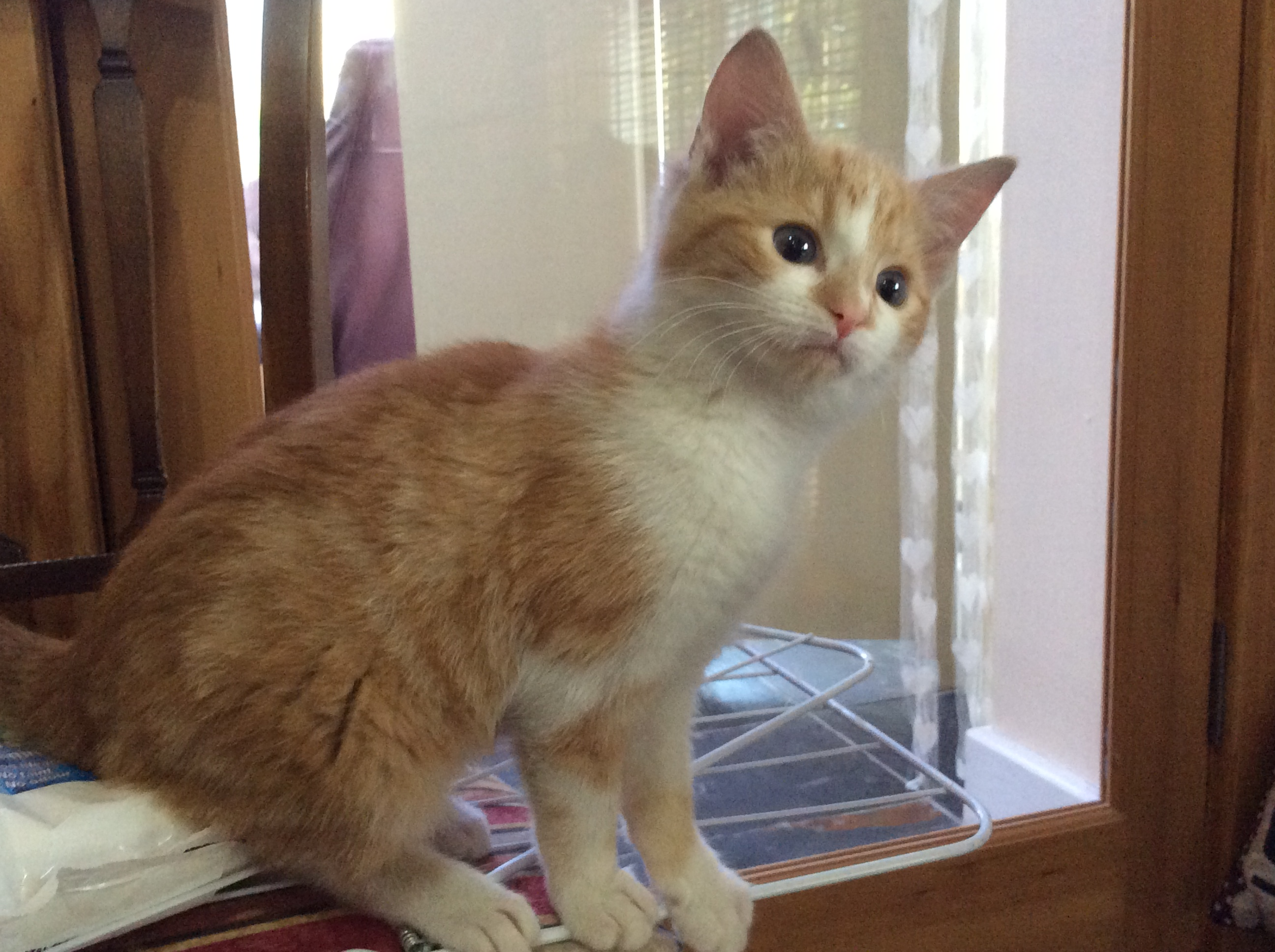 RE-HOMED: Kitten in foster care.