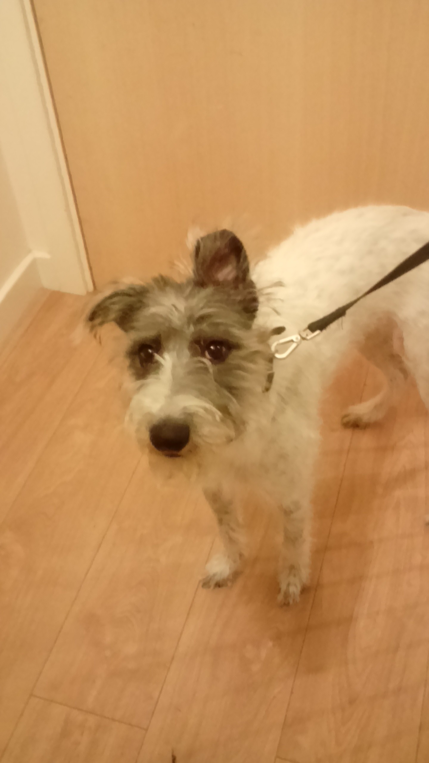RE-HOMED: Alfie who is 7 months old and a nice natured boy.