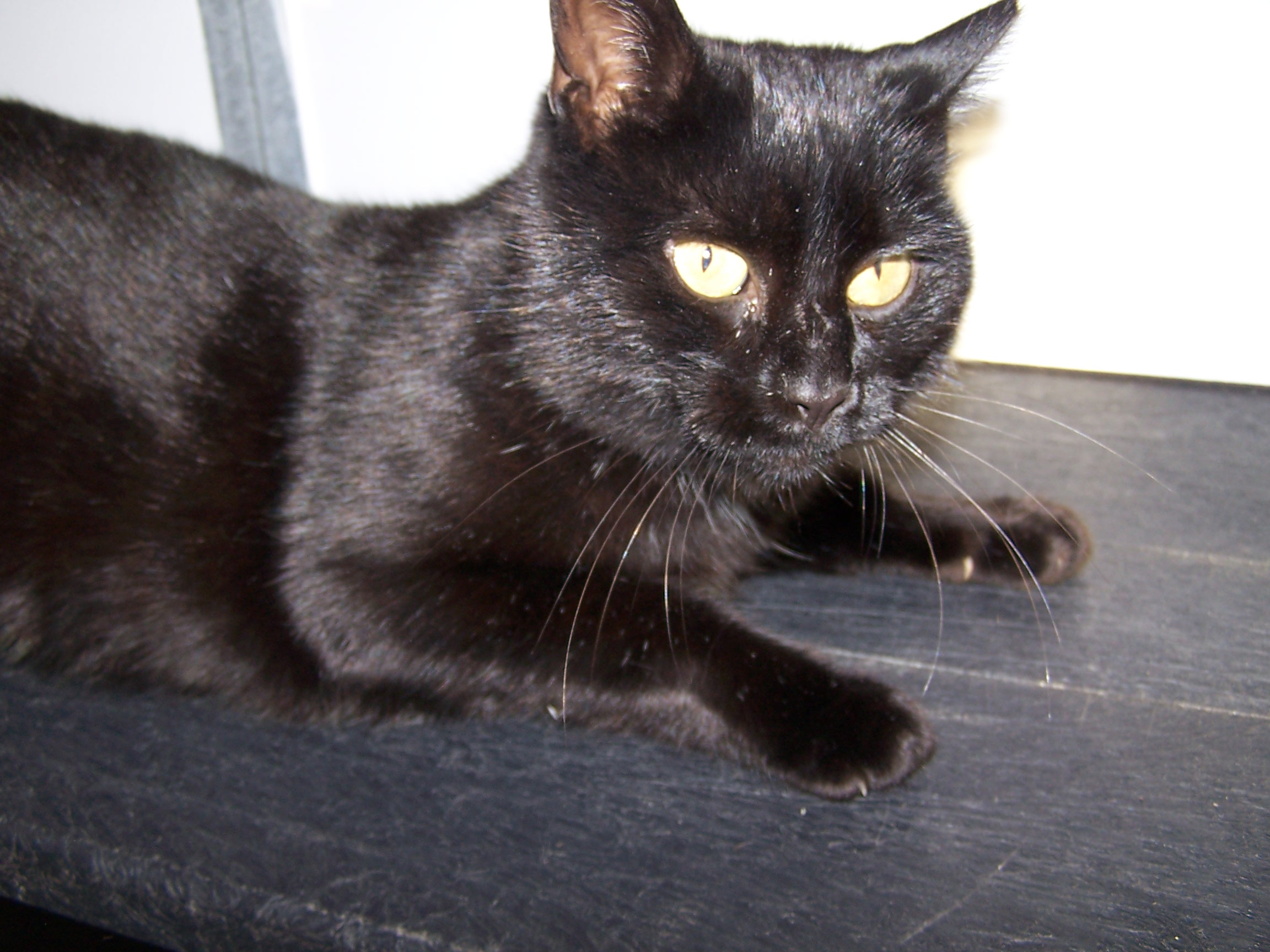RE-HOMED: Toby, Male cat.