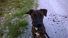 RE-HOMED: 5 month old Male Terrier Cross