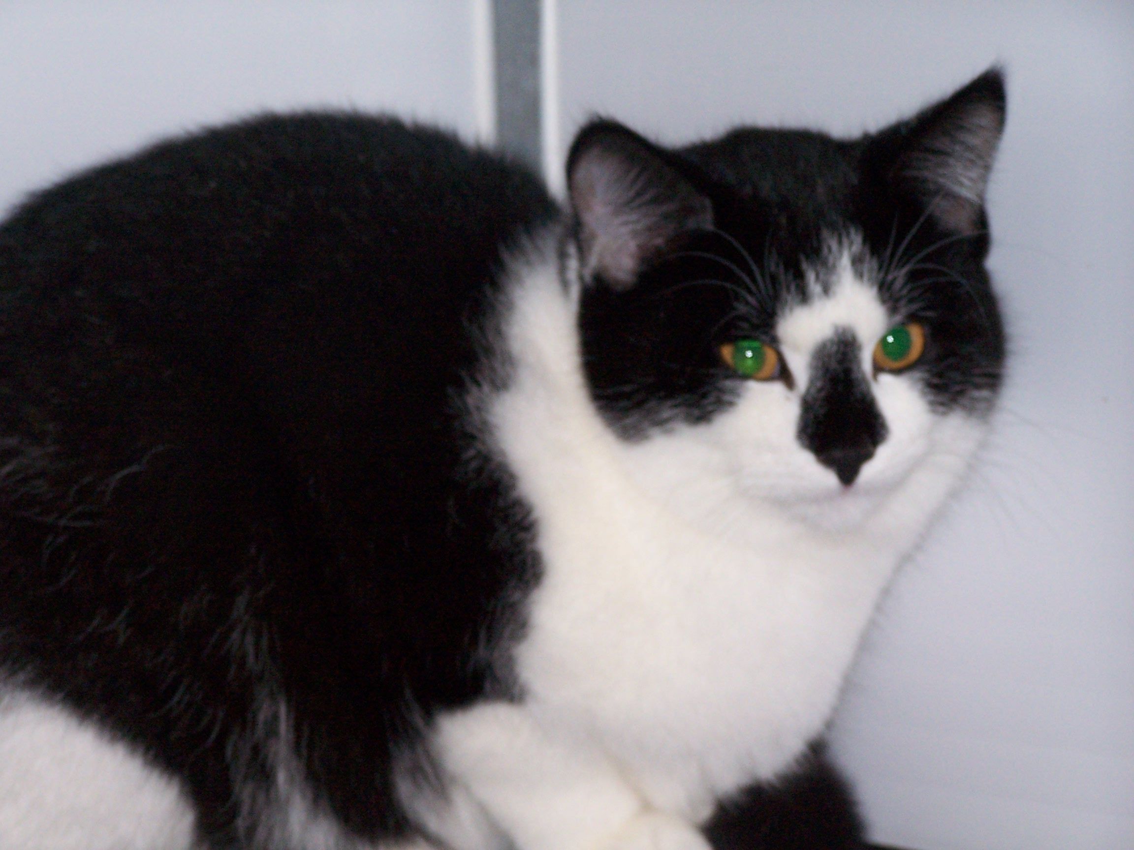 REHOMED: Smudge 8 month old girl.