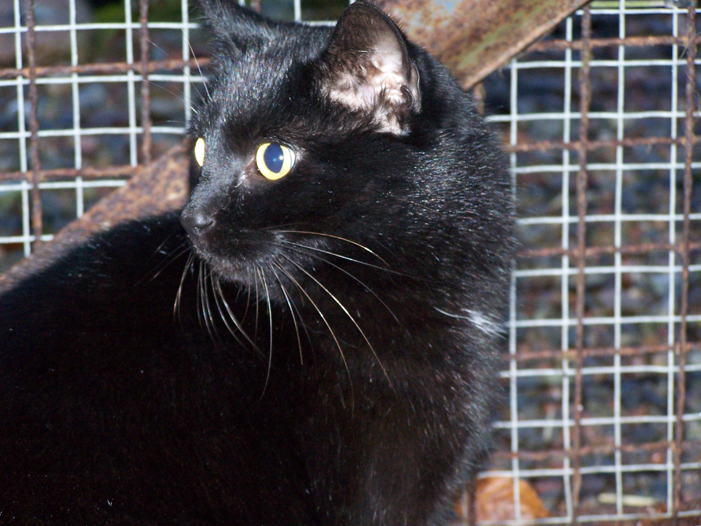 REHOMED: Sooty friendly neutered boy