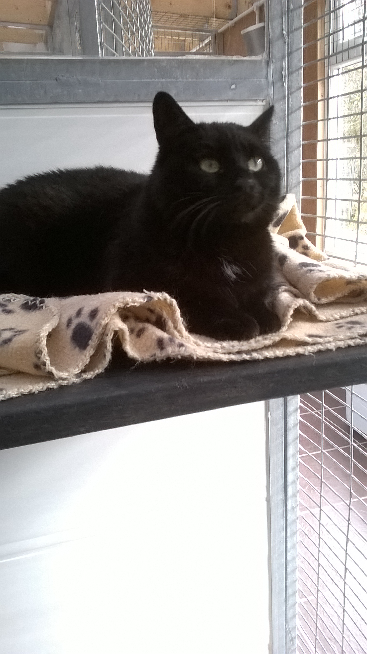 Re-homed: Missy 2 year old female cat