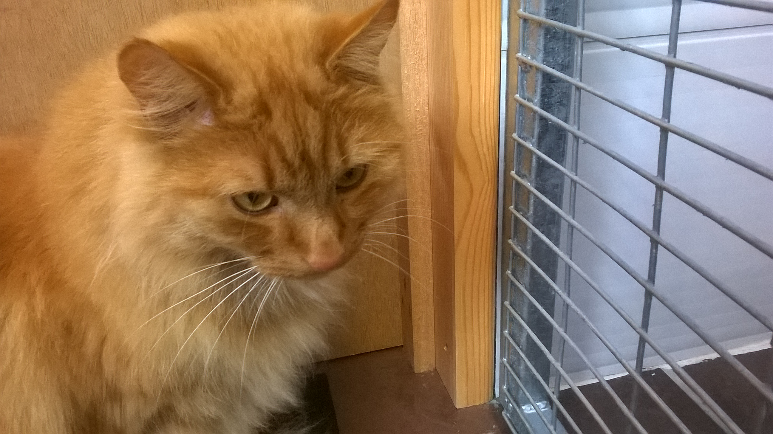REHOMED:Tigger, 2 year old male.