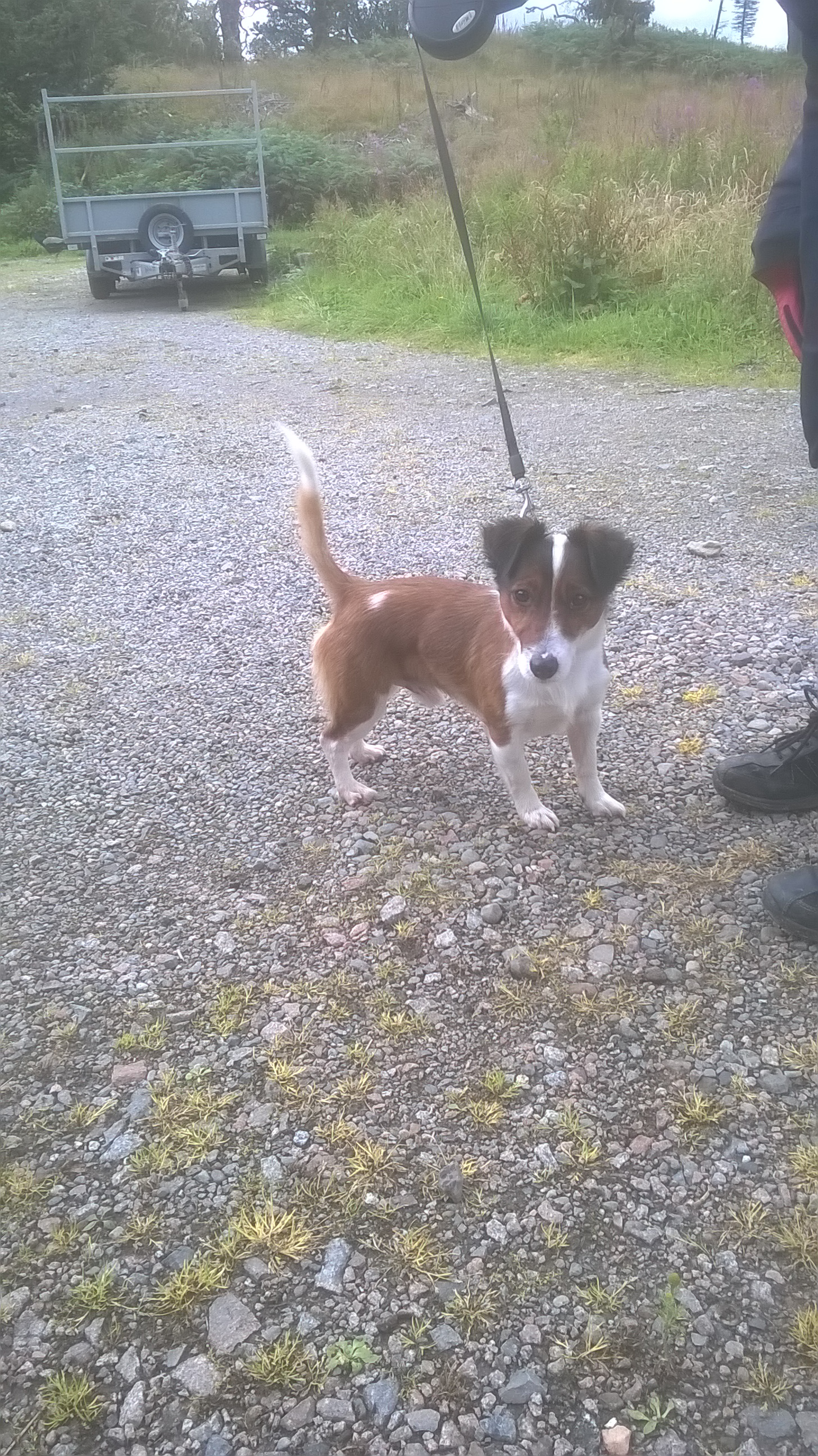 Re-homed: Milo, 4 year old Jack Russell