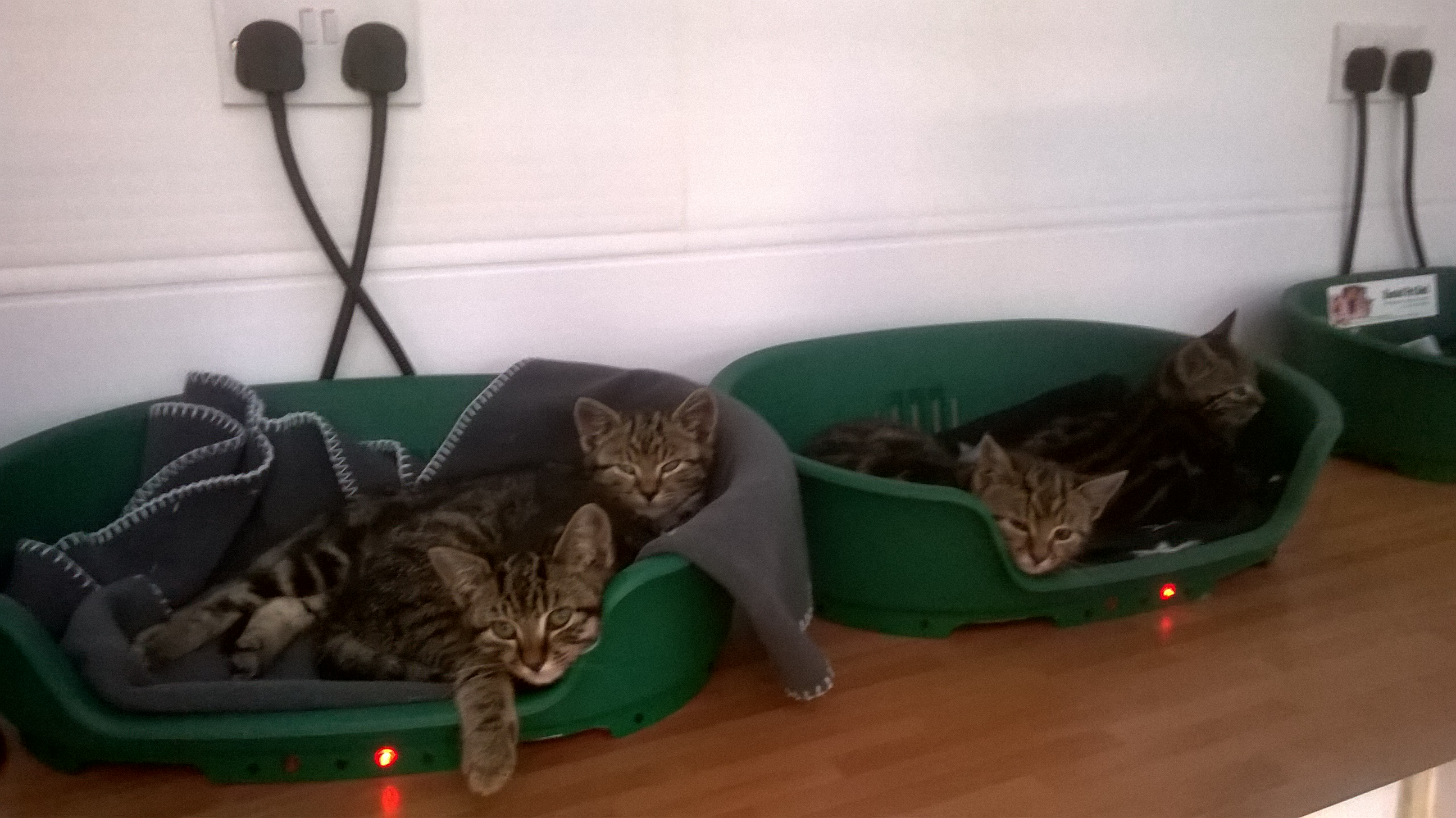 REHOMED: Tabby kittens need a home