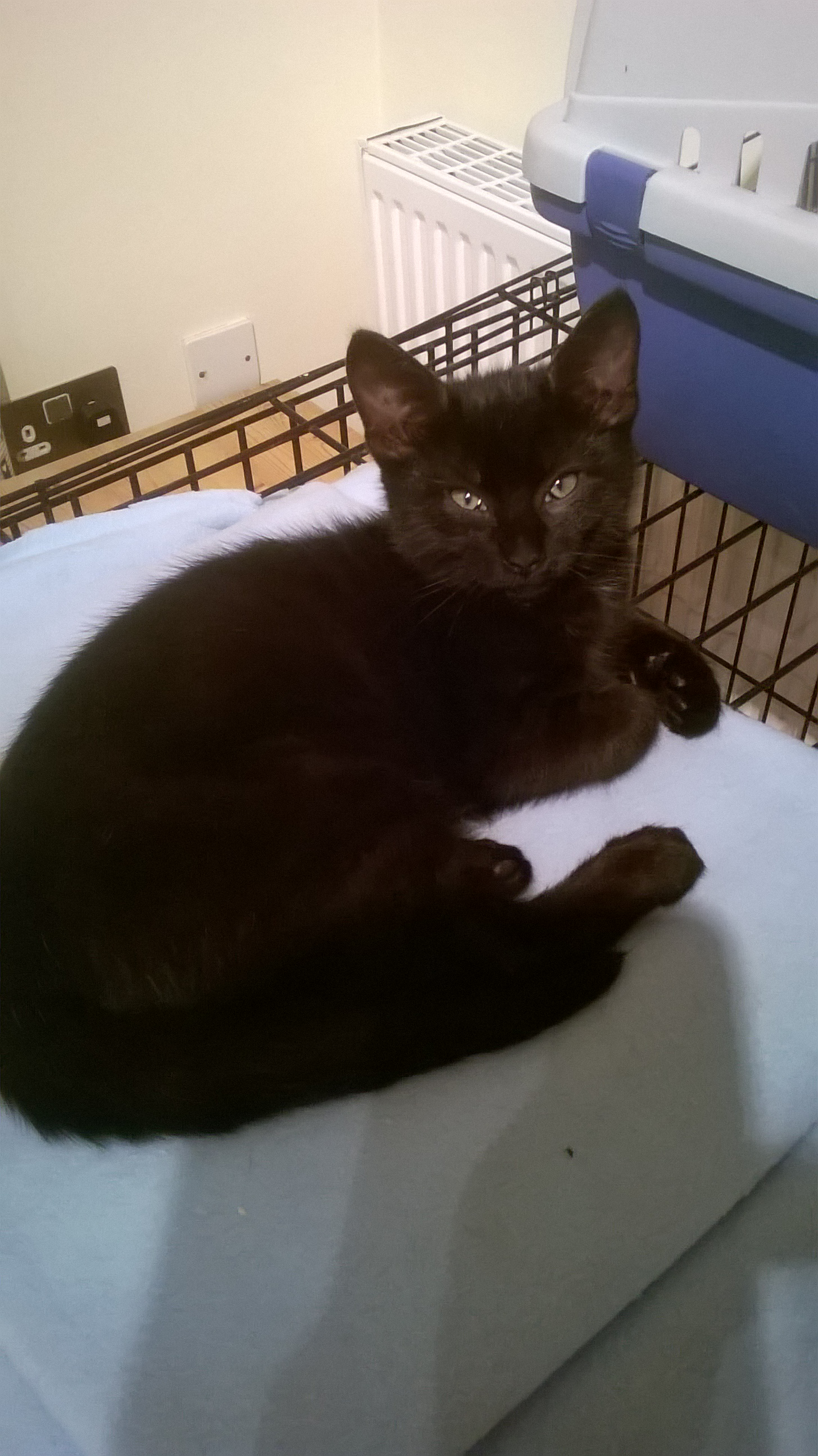 REHOMED:Black Kitten looking for a home