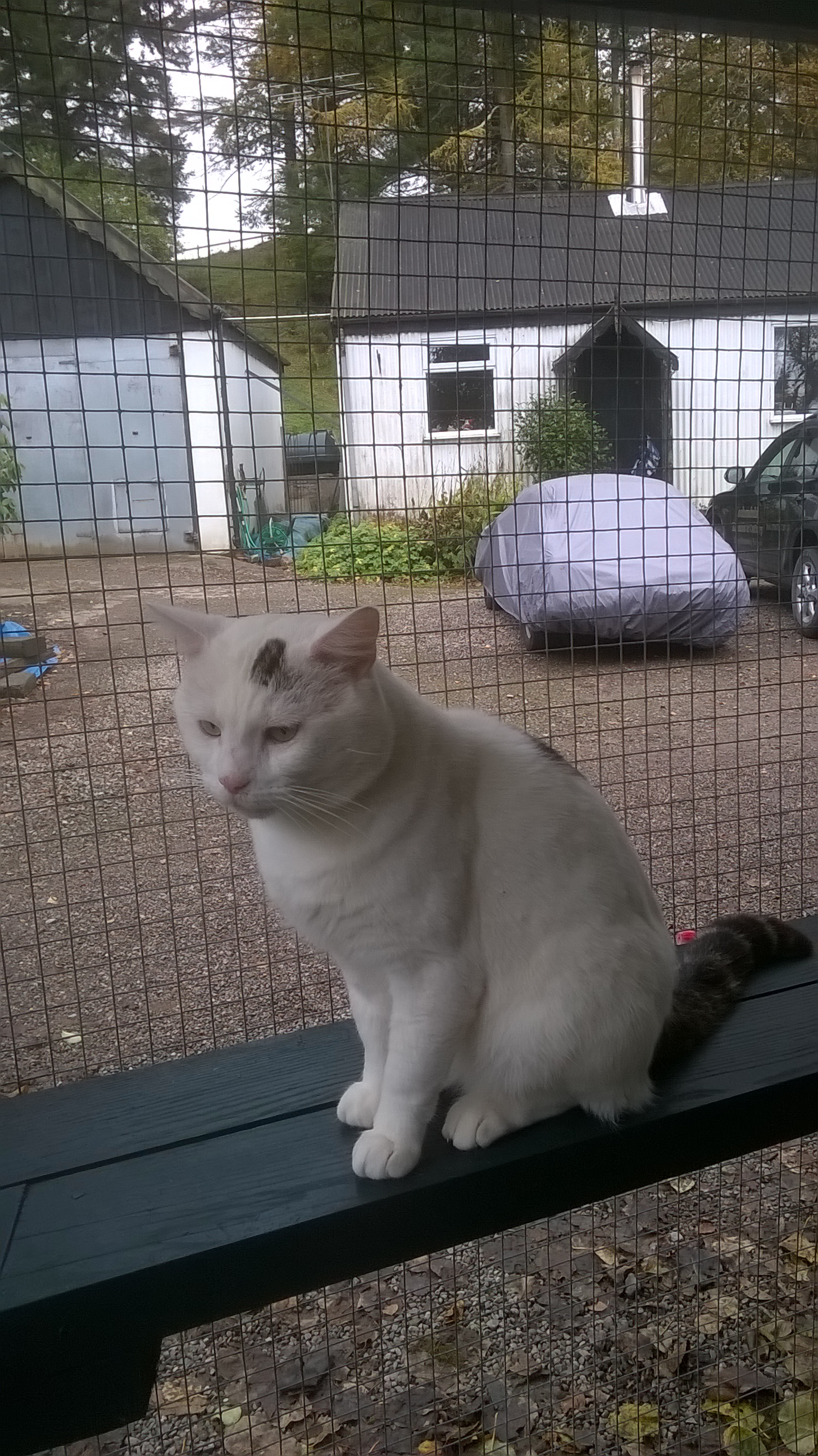 REHOMED: Charlie, friendly male cat.