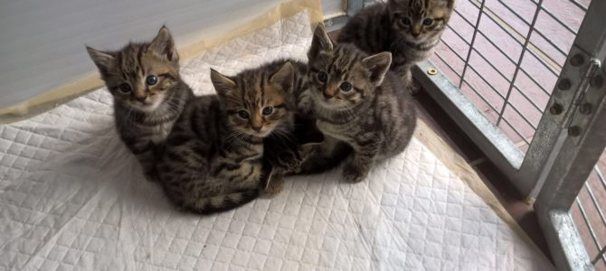 Kittens Rehomed.
