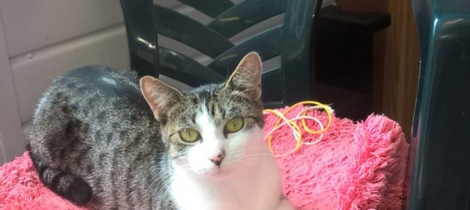 REHOMED: Tara, female cat.