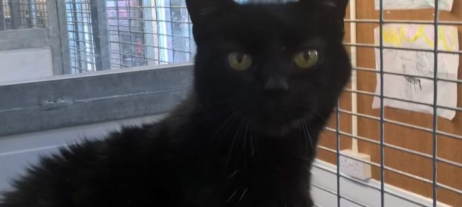 REHOMED: Clemi, female cat