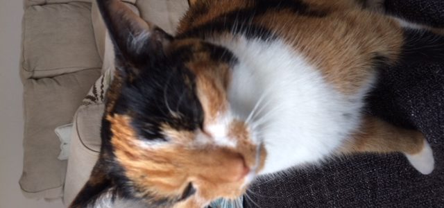 REHOMED: Emmy, female cat