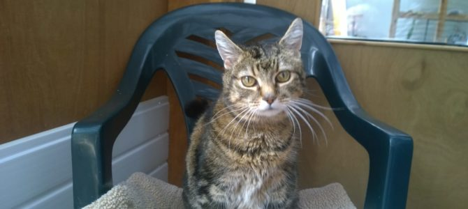 REHOMED: Paisley, cuddly cat.