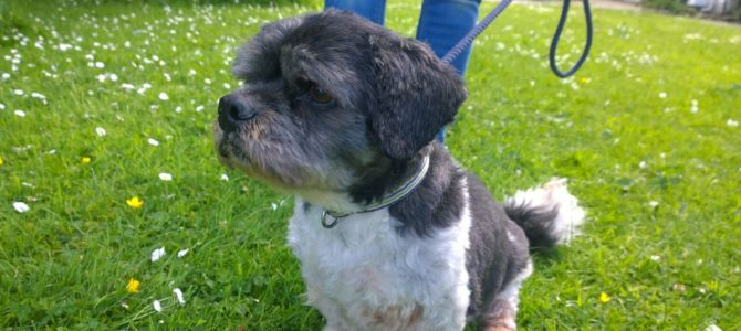 REHOMED: Romeo, 13 year old Male