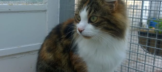 REHOMED: Ruby, affectionate cat.
