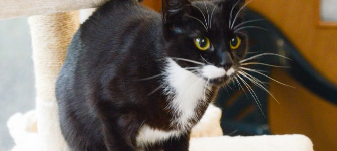 rehomed:  Squeak, 18 month old female cat.