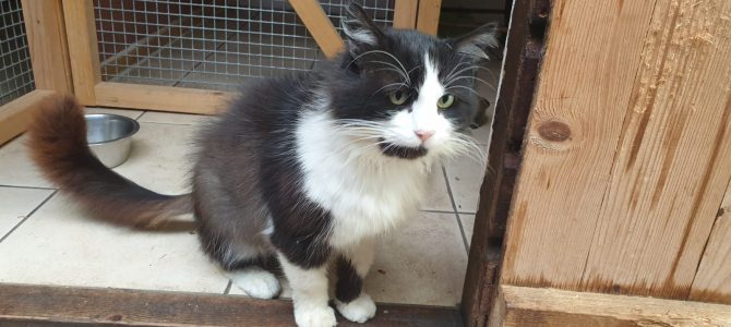 Unneutered male cat found.