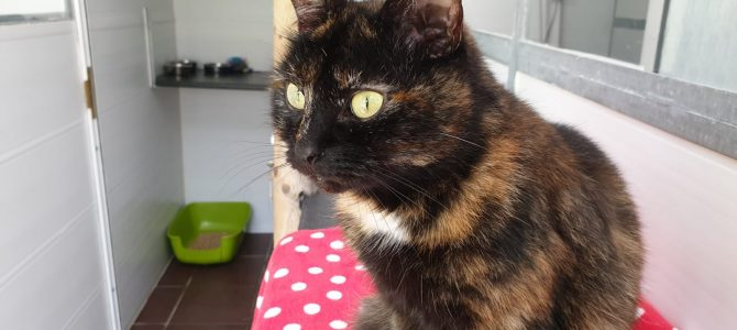 REHOMED: Lou Lou, 8 year old female cat.