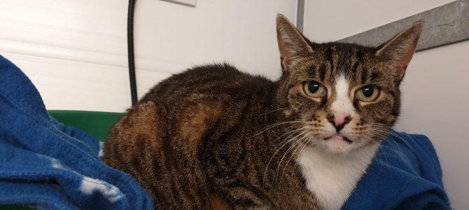 Rehomed: Ginty, 7 year old tabby girl.