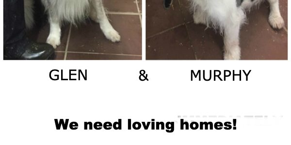 Rehomed: Glen and Murphy