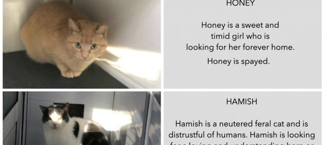 Rehomed: Cats looking for a home